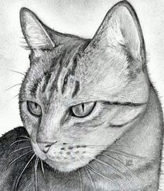 How to Draw a Cat Head, Draw a Realistic Cat, Step by Step, Pets, Animals, FREE Online Drawing Tutorial: