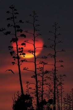 ~~...el eterno sol... (the eternal sun) ~ Andalusia, Spain by Rafael Ramos Fenoy~~