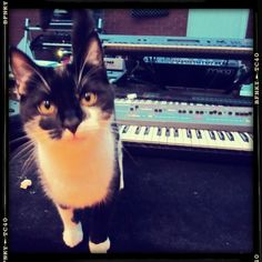 Synth Kitty