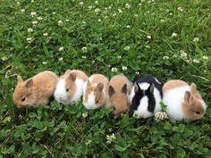 Картинка с тегом «animal, bunny, and rabbit»