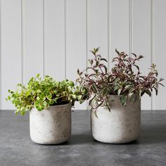 Straight Cement Plant Pots in Stone on table