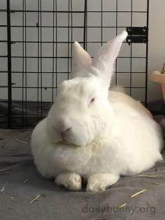 Bunny gives his human the stinkeye - November 3, 2016