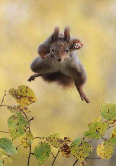 Ardilla saltando. ganadores-premios-fotogradia-comedy-wildlife-2015 (13)