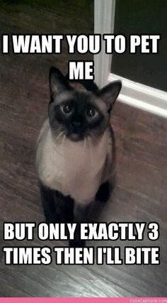 Today, we introduce a new funny pictures collection just for the your entertainment. Check out 31 funny pictures that blow your mind. Funny Animal Memes, Funny Animal Pictures, Cute Funny Animals, Funny Cat Photos, Funny Cute Cats, Hilarious Pictures, Funny Kittens, Adorable Kittens, Crazy Cat Lady
