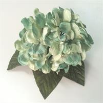 Hortensias verde agua