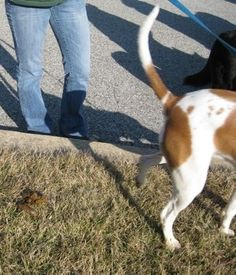 Housetraining Articles - Housebreaking your puppy or dog