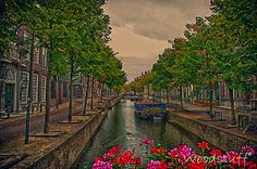Delft by Woodstuff®