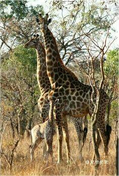 Zebras, Animal Photography, Just Go, Bella, Images, Safari, Butterflies, Families, Wildlife