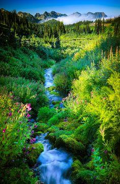 Paradise Creek in Mount Rainier National Park nature eco beautiful places landscape travel natura peisaj All Nature, Amazing Nature, Nature Source, Nature Quotes, Places To Travel, Places To See, Beautiful World, Beautiful Places, Simply Beautiful