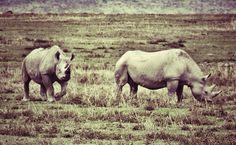 Rhynoceros au parc de Ngorongoro / Tanzanie 2014