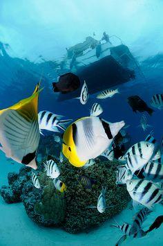 Bora Bora by Jérôme C