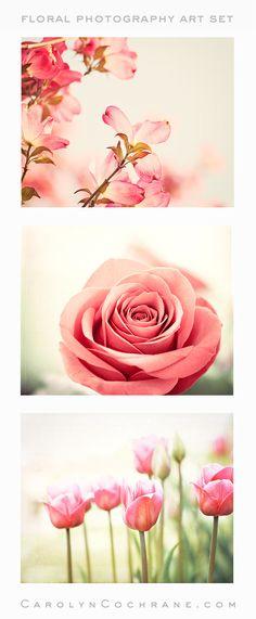 Coral Floral Photography Art by Carolyn Cochrane   Salmon Flower Photo Prints