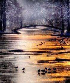 Snowy bridge over bird-filled stream