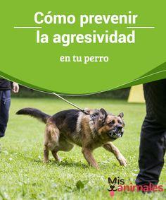 Cómo #prevenir la agresividad en tu perro El perro es #considerado el mejor #amigo del hombre. Y por eso es la #mascota elegida por millones de #adultos y niños de todo el mundo. Pero ¿qué hacer si aparecen los primeros síntomas de agresividad en tu perro?