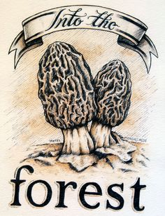 """Check out this awesome print titled """"Into the Woods."""" This print features a pair of Morel Mushrooms sprouting up from the leaves! The original for this illustration was created using ink pens and coffee staining.  #illustration #art #morel #mushroom #nature"""