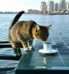 Even cats in Mersin, Turkey, need their morning coffee to start the week on the right paw. #MondayMotivation