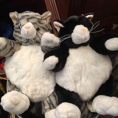 Chubby Kitties! 🐱🐯 #mmflowers #plush