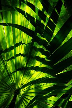 ✯ LUZ VERdE y NAtURAL ... By Narciso Varguez ✯ [green and natural light]  [per previous pinner]