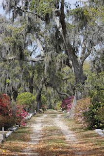 Bonaventure Cemetery, Savannah, GA - spooky Spanish moss draped setting of Midnight in the Garden of Good and Evil. Read about Savannah here http://wayinto.com/atlanta/savannah/