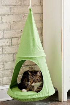 cute and attractive pets: Hanging cat furniture