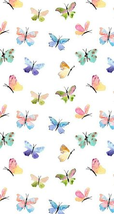 Animation colorful butterfly beautiful cute