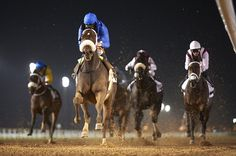 Confrontation (USA) 2010 Dkb.g. (War Pass (USA)-Successfully Sweet (USA) by Successful Appeal (USA) 1st Firebreak S (UAE-G3,1600mD,Meydan) (photo: Andrew Watkins Photography)