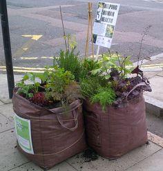 pop-up gardens at the Chelsea Fringe
