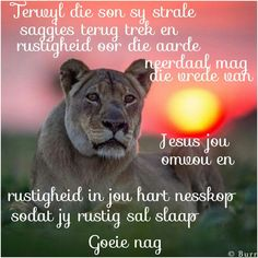 Evening Greetings, Goeie Nag, Angel Prayers, Good Night Quotes, Sleep Tight, Afrikaans, Life Lessons, Beautiful Pictures, Animals