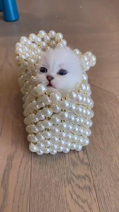 Funny Cute Cats, Cute Funny Baby Videos, Cute Funny Animals, Cute Baby Animals, Cute Baby Puppies, Cute Animals Puppies, Cute Dogs, Baby Animals Pictures, Cute Animal Videos