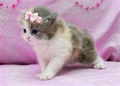 Image result for Animals with bows