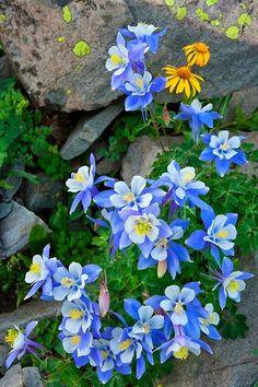 Spring gardening ~ Dreamy Nature
