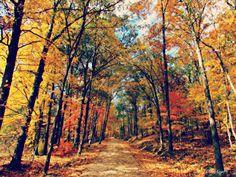 October Day @ Land Between the Lakes Kentucky
