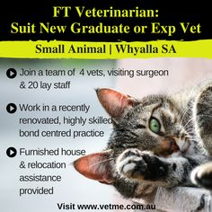 FT Vet, Small Animal, Whyalla SA: join the highly skilled team of 4 vets & 20 lay staff in a recently renovated practice in Whyalla. A medium sized, coastal city that offers an excellent lifestyle with fishing, boating, swimming and more.