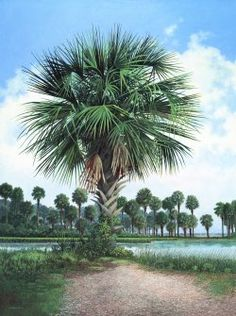 Palmetto Trees wish we could grow these in Michigan Jim Harrison, Palmetto Tree, Do Love, American Artists, Daydream, South Carolina, Palm Trees, World, Beach