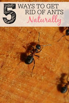 Do you have ant problem at your house? Skip the chemicals and try these ways to get rid of ants naturally. They work great and some will make your house smell fantastic.