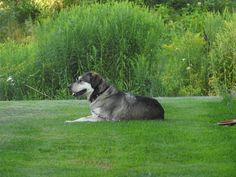 Husky, Birds, Landscape, Dogs, Animals, Animales, Scenery, Animaux, Bird