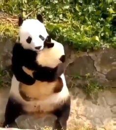 Cute Wild Animals, Cute Funny Animals, Animals Beautiful, Animals And Pets, Cute Dogs, Cute Babies, Funny Animal Videos, Funny Animal Pictures, Anime Vs Cartoon
