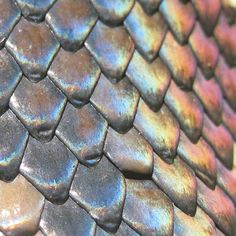 Snake scales were an inspiration for the Matthew Williamson Rainbow Snake print.