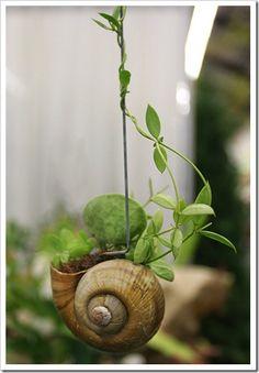 snail shell vertical garden - perfect for the faerie garden I'm planning