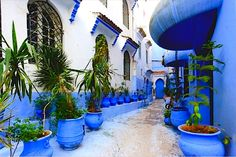 Private Chefchaouen day trip from Tangier to discover the blue city. Morocco Chefchaouen, Blue City, Morocco Travel, Day Trip, Relax, Places To See, Beautiful Places, Around The Worlds, Vacation