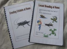 Originally we bred bugs to feed our reptiles, then to sell - then we got tired of little boxes of light simply everywhere so we went back to self providing.  I explained to people I had sold bugs to, how to breed, then I put it together in wee booklets.