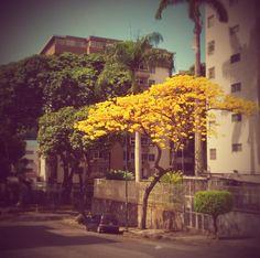 #Araguaney #Venezuela #Paisaje