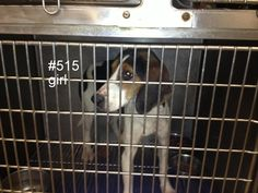 1-2 year old walker coonhound...Logan County WV logancountyanimals@gmail.com Please share!! Not much time for them!