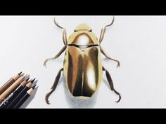 How to draw gold / metallic object with colored pencils -- A golden beetle. -  art @ Fadil on YouTube