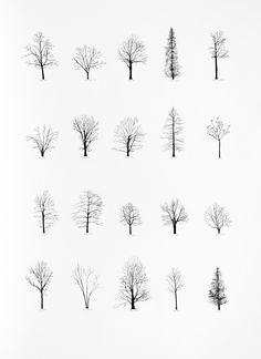 "Katie Holten has made a series of tree drawings. In 2015 she created a ""Tree Alphabet"" and published the book ""About Trees"". A series of tree drawings was commissioned by the Zentrum Paul Klee for the group exhibition ""About Trees"" in Photoshop, Drawn Art, Hand Drawn, Art Plastique, Painting & Drawing, Drawing Trees, Life Drawing, Trees Drawing Simple, Drawing Drawing"