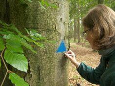 Project in the Czech republic aimed on the conservation of trees with holes./Projekt v Českej republike zameraný na ochranu stromov s dutinami.