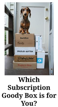 Which Subscription Dog Goody Box is for You?