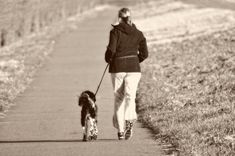 Recommended Article: Midlife cardiovascular fitness and dementia: A longitudinal population study in women. Stop Dog Barking, Shelter Dogs, Healthy Weight Loss, Workout Programs, Dog Training, Jogging, Healthy Lifestyle, Exercise, Continue Reading