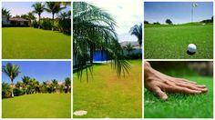 """Sabe aquele ditado """"a grama do vizinho é sempre mais verde"""", ele pode ir além do que imaginamos e não representar apenas uma insatisfação pessoal, mas o gramado pode estar mais verde porque talvez"""
