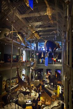 National Museum Of Scotland ~ Edinburgh City